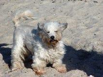 stormachtige hond royalty-vrije stock afbeeldingen