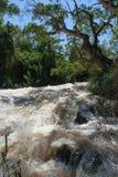 Stormachtige rivier Stock Afbeeldingen