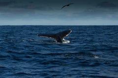 Stormachtige Sepia Overzees royalty-vrije stock fotografie