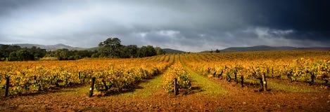 Stormachtige Wijngaard stock afbeeldingen