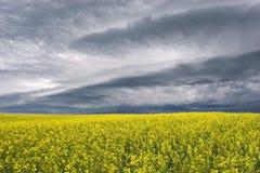 Stormclouds über dem Grasland Stockbild