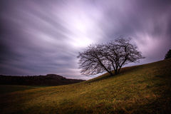 Stormclouds och träd Arkivfoto