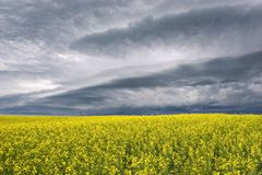 Stormclouds over the Prairie. Stormclouds gathering over canola fields Stock Image