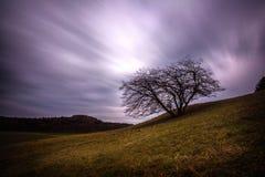 Stormclouds y árbol Foto de archivo
