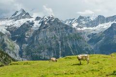 Stormen är kommande i schweiziska fjällängar arkivfoto