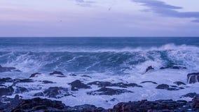 Stormen vinkar på kusten stock video