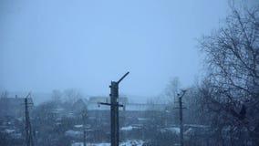 Stormic天气 与风的大雪秋天 鸟舍 苹果覆盖花横向草甸本质星期日结构树 股票视频
