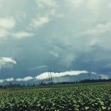 Stormig himmel över fält royaltyfri foto