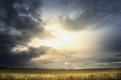 Stormig himmel över vetefält Arkivfoto