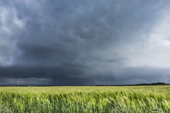 Stormig himmel över vetefältet, landskap Royaltyfria Foton