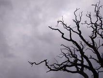 Stormig himmelträdkontur royaltyfri bild