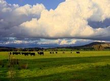 Stormig jordbruksmark i Australien Royaltyfri Foto