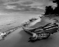 Stormig strand med drivvedvatten som plaskar över journal arkivbild