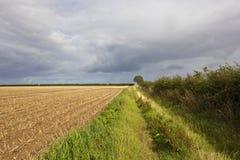 Stormiga himlar och potatisskörd Arkivbild