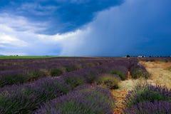 Stormiga himlar ovanför lavendelfält royaltyfri foto