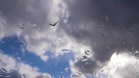 Stormiga regnmoln i blå himmel, tidschackningsperiod stock video