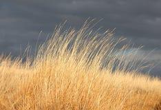 Stormiga skies fotografering för bildbyråer