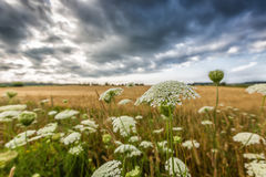 stormiga skies Royaltyfri Fotografi