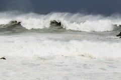 Stormigt hav under tyfon Royaltyfria Bilder