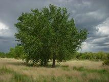 Stormigt träd royaltyfri foto
