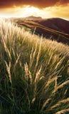 Stormloop bij de zonsondergang Royalty-vrije Stock Fotografie