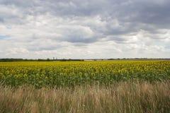 Stormmoln över fält Arkivfoto
