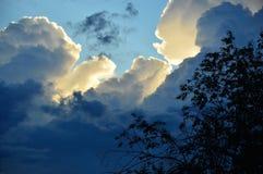 Stormmoln som är upplysta vid aftonsolen På bakgrunden av moln är en buske Royaltyfri Fotografi