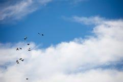 Stormo che vola su Fotografie Stock Libere da Diritti