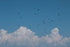 Stormo degli uccelli Immagine Stock Libera da Diritti