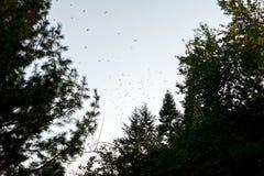 Stormo degli uccelli al crepuscolo fotografia stock libera da diritti