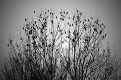 Stormo degli uccelli in albero Fotografia Stock Libera da Diritti
