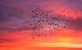 Stormo degli uccelli che formano un cuore Fotografia Stock Libera da Diritti