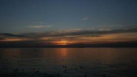 Stormo degli uccelli che volano sopra il mare al movimento lento di tramonto stock footage