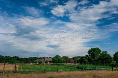 Stormo degli uccelli che volano via sopra un campo alla luce solare Fotografia Stock