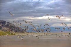 Stormo degli uccelli di volo contro un cielo coperto nuvola fotografia stock