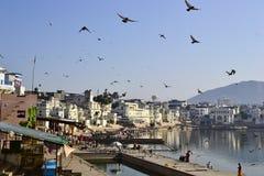 Stormo degli uccelli di volo sopra il lago in Pushkar Immagine Stock