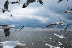 Stormo dei gabbiani bianchi che sorvolano mare sul fondo del cielo della nuvola di pioggia Fotografia Stock