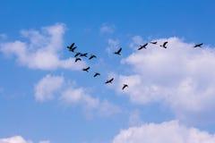 Stormo dell'uccello Fotografie Stock