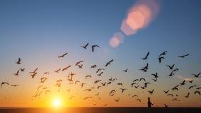 Stormo delle siluette degli uccelli sopra l'Oceano Atlantico durante il tramonto Immagini Stock