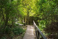 Storms river walkway. Walkway to view storms river bridge Royalty Free Stock Photography