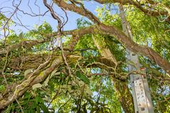 Stormskada av ett träd arkivfoton