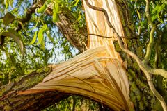 Stormskada av ett träd royaltyfri foto
