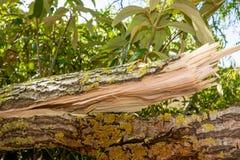 Stormskada av ett träd royaltyfri bild