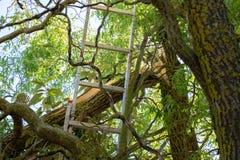 Stormskada av ett träd arkivbild