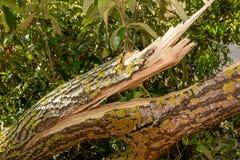 Stormskada av ett träd royaltyfri fotografi