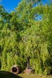 Stormskada i en trädgård arkivfoto