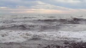 Stormsvallvågor och seagulls på vatten stock video