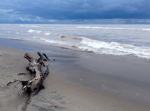 Stormy beach. A stormy day at the beach. With driftwood stock photo