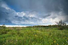 Stormy clouded sky over flowering marsh Royalty Free Stock Photo