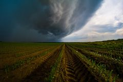 Stormy corn Stock Images